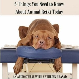 5 Things You Need To Know About Animal Reiki 300px