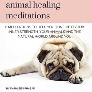 Animal Healing Meditations Audio 300px