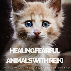 Healing Fearful Animals with Reiki Audio 300px