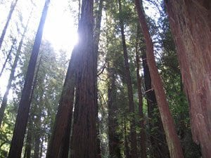 reiki-lessons-from-the-trees