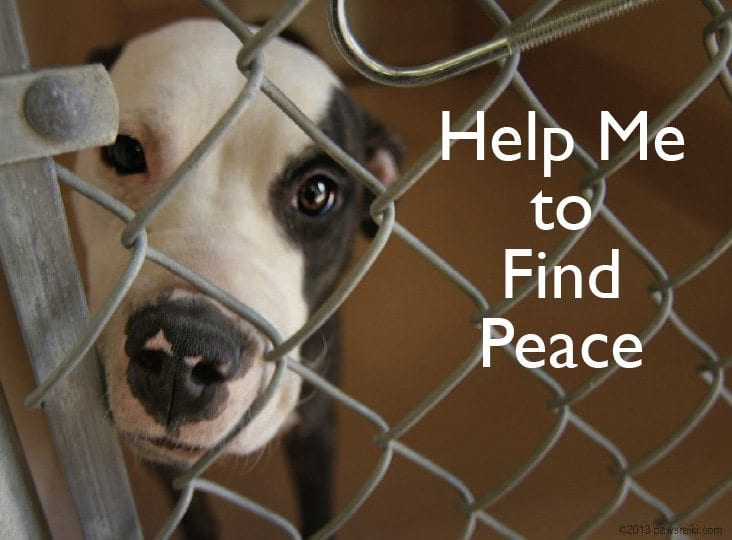 help-animals-find-peace