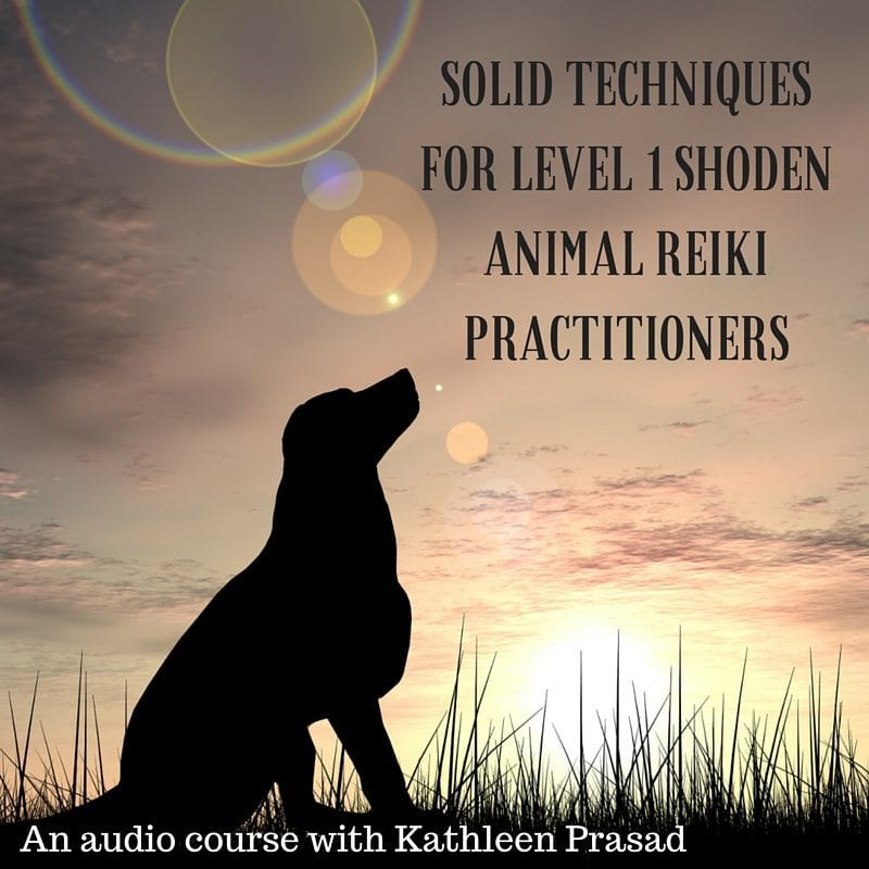 Solid Techniques for Level 1 Shoden AnimalReiki Practitioners