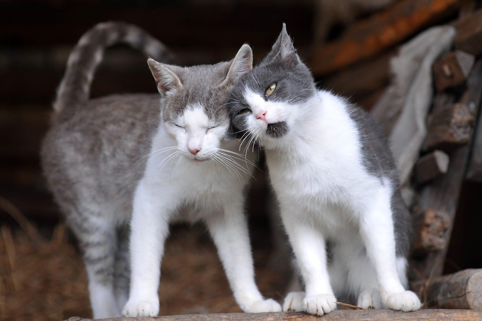 Music For Cats And Kittens  H