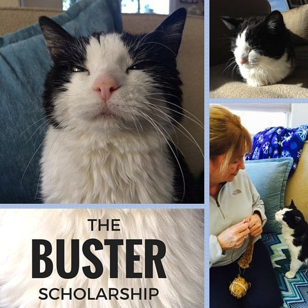 Buster Scholarship 600px x 600px