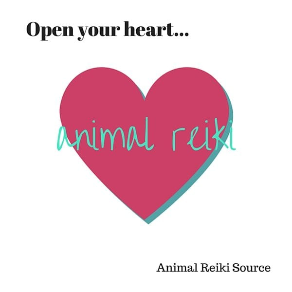 open your heart animal reiki 600px