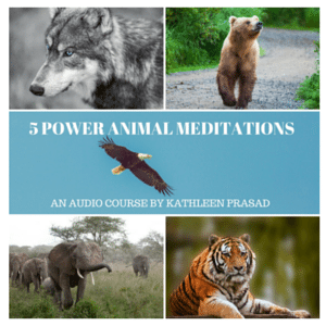 5 POWER ANIMAL MEDITATIONS 300px