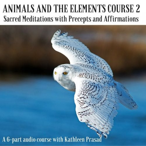 animals and the elements course 2