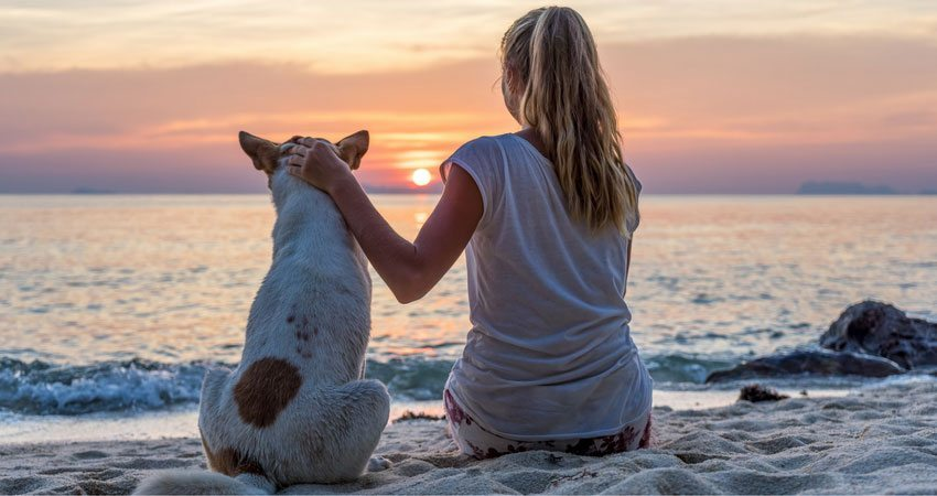 The Radiance of Reiki: Simple Ways to Heal with Your Dog
