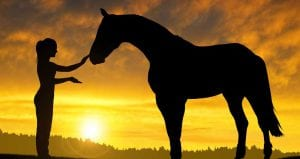 equine reiki training