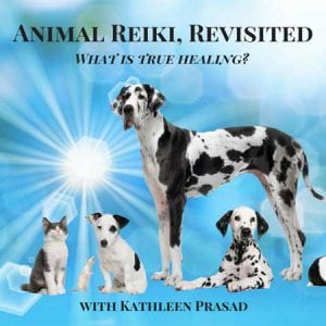 Animal Reiki Revisited