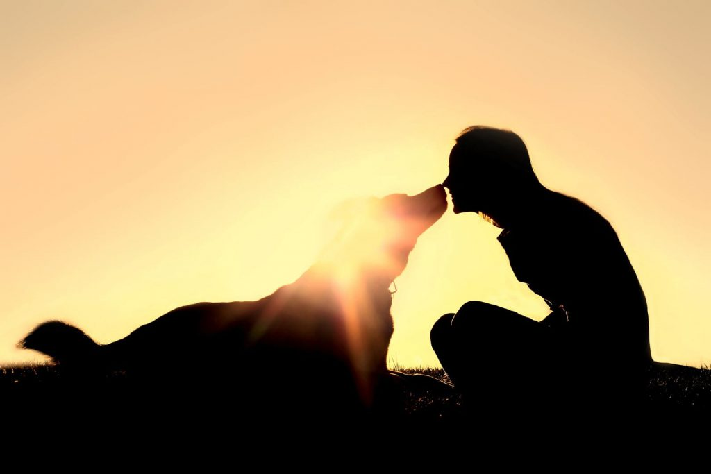15-ways-to-honor-your-dearly-departed-animal