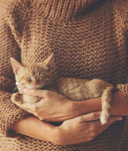 Kitten sleeping on hands