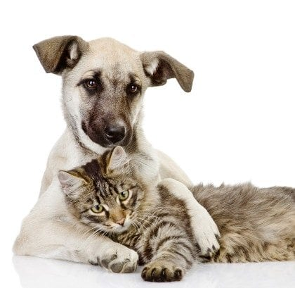 dog embraces a cat