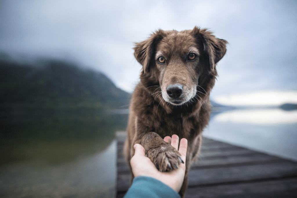 a human holding a brown dogs paw beside a dock and lake