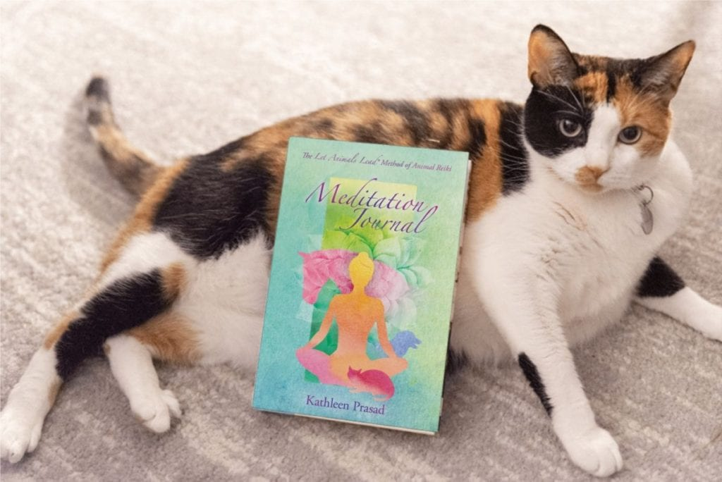 cat next to animal reiki meditation journal