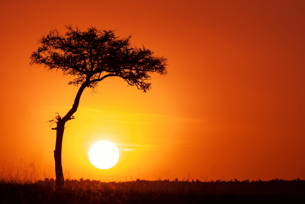 a silhouette of a tree in front of an orange sunset