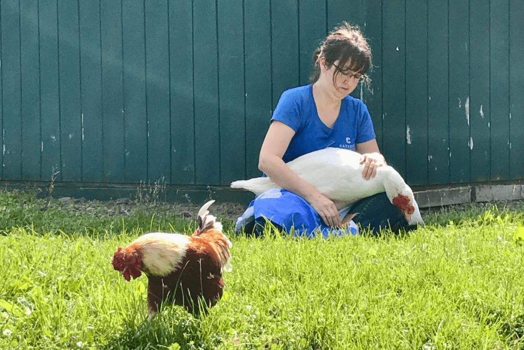 a woman sharing reiki with chickens