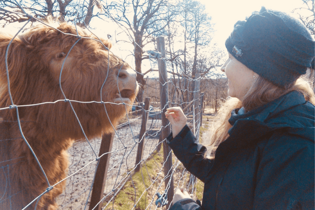 kathleen and a cow named honey