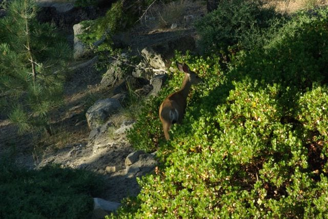 a deer walking in the bushes