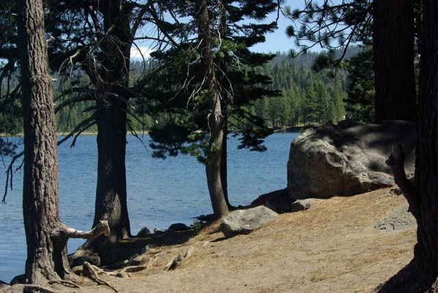 a lakeside shore with trees
