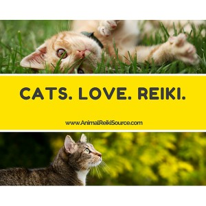 Cats love reiki