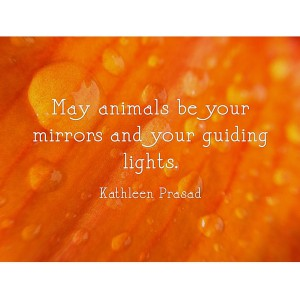 May your animals be your mirror