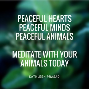 Peaceful hearts, peaceful minds, peaceful animals