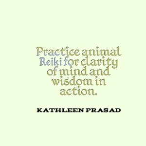 Practice animal reiki for