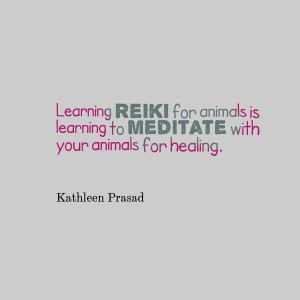 Learning reiki for animals is